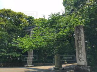 福岡縣護国神社の大鳥居の写真・画像素材[1156002]