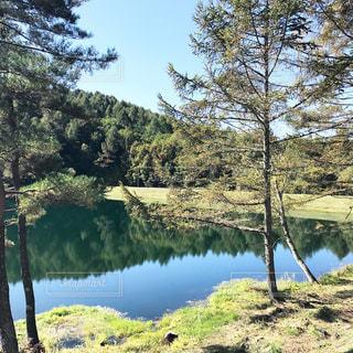 木々 に囲まれた水の体の写真・画像素材[801932]
