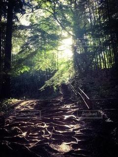 自然の写真・画像素材[34917]