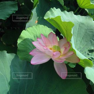 花の写真・画像素材[692032]