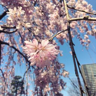 花の写真・画像素材[692041]