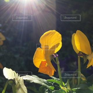 花の写真・画像素材[692573]