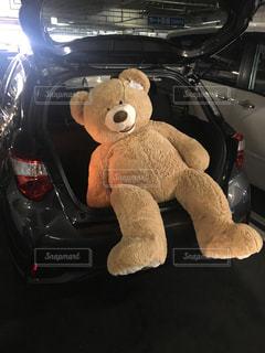 熊の写真・画像素材[691937]