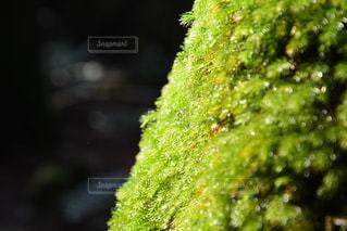 緑の写真・画像素材[692765]
