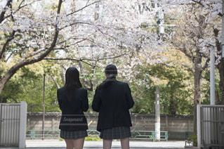 桜と女子高生の写真・画像素材[692819]