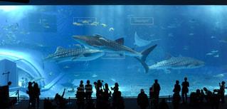 美ら海水族館の写真・画像素材[695410]