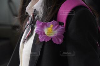 ハイビスカスと女子生徒の写真・画像素材[698314]