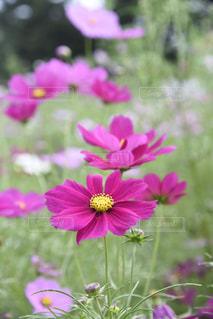 植物にピンクの花の写真・画像素材[802275]