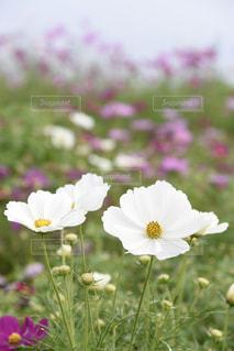 近くの花のアップの写真・画像素材[802277]
