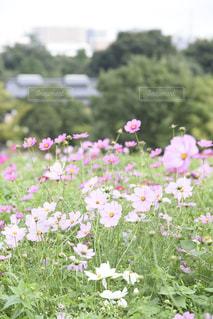 テーブルの上の花の花瓶の写真・画像素材[802280]