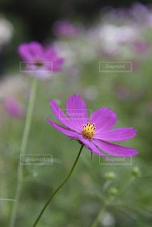 近くの花のアップの写真・画像素材[802281]