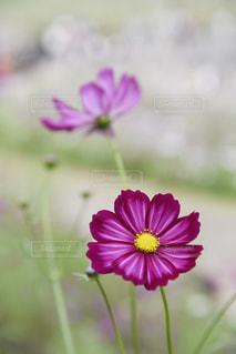 近くの花のアップの写真・画像素材[802286]