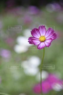 近くの花のアップの写真・画像素材[802294]
