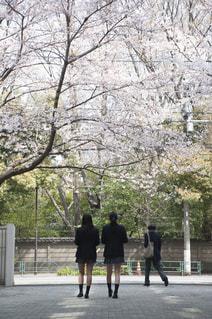 桜を見上げる女子高生の写真・画像素材[993386]