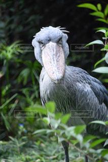草の中に立っている鳥の写真・画像素材[1020036]
