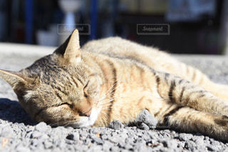 地面に横になっている猫の写真・画像素材[1591813]