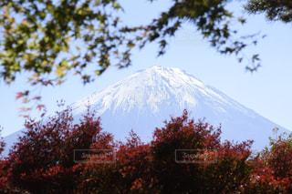 紅葉と富士山の写真・画像素材[1591819]