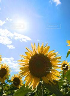 花の写真・画像素材[696088]