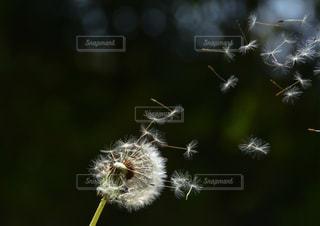 花の写真・画像素材[699441]