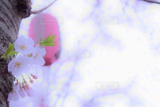 春 - No.693029