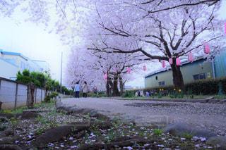 春 - No.693030