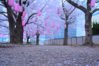 春 - No.693031
