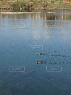 川の写真・画像素材[693123]