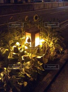花の写真・画像素材[693129]