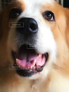 犬の写真・画像素材[693544]