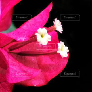 花の写真・画像素材[693618]