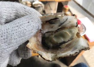 広島 牡蠣 炭火 手袋 火の写真・画像素材[695717]