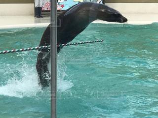 水中を泳ぐ動物の写真・画像素材[717127]