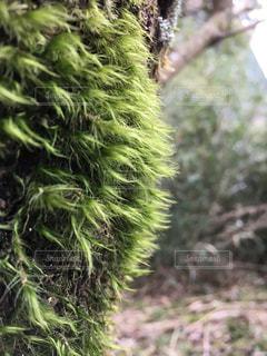 自然の写真・画像素材[693753]