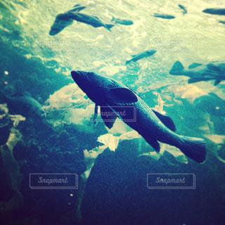 魚の写真・画像素材[693655]