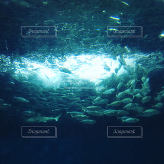 魚の写真・画像素材[695900]