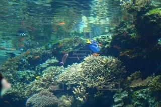 サンゴ - No.695548