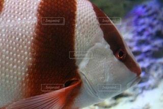 魚 - No.695549