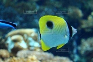 魚 - No.695550