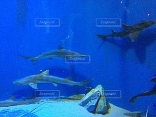 サメ - No.695593