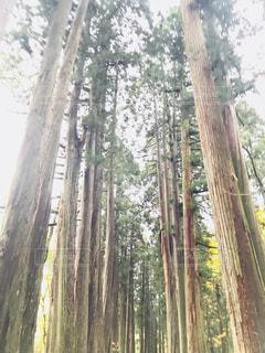 フォレスト内のツリー - No.854508
