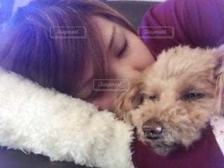 犬とお昼寝の写真・画像素材[1000950]