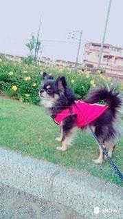 犬の写真・画像素材[22151]
