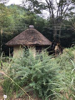茅葺き屋根の小屋の写真・画像素材[1793368]