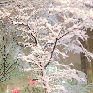 積雪した木の写真・画像素材[1793388]