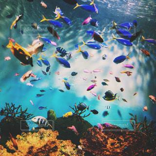 熱帯魚の写真・画像素材[696055]