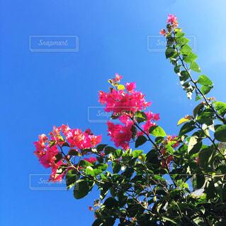 木の花 - No.707157
