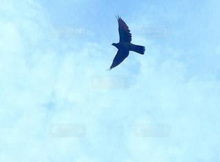 曇りの青い空を飛んでいる鳩 - No.717770