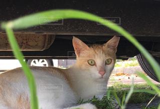 地面に横になっている猫の写真・画像素材[722774]