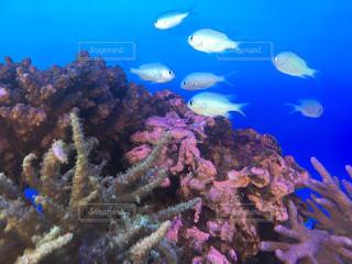 サンゴと熱帯魚🐠 - No.746257