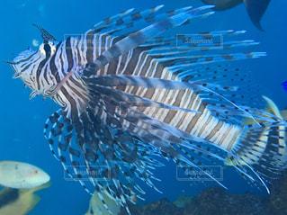 水面下を泳ぐ魚たちの写真・画像素材[746258]